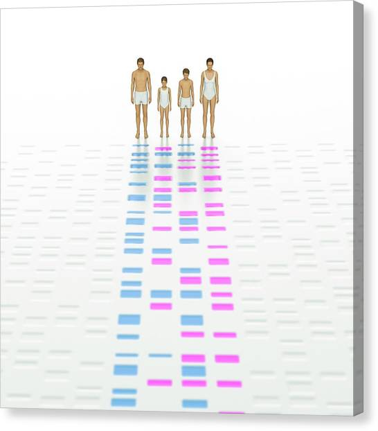Biochemistry Canvas Print - Genetic Relationships Of A Family by David Parker