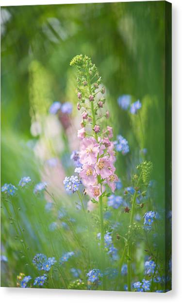 Gentle Enchantment Canvas Print