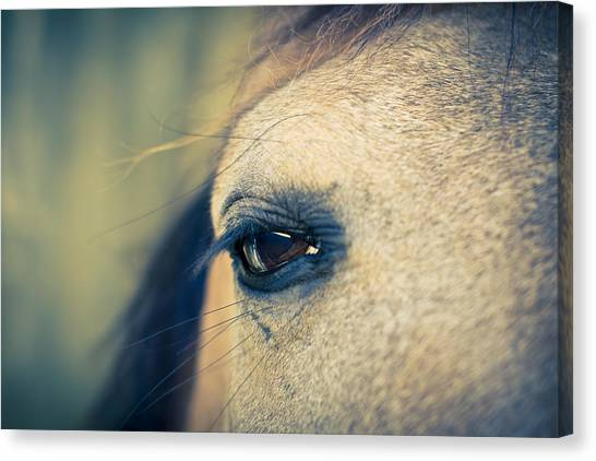 Canvas Print featuring the photograph Gentle Eye by Priya Ghose