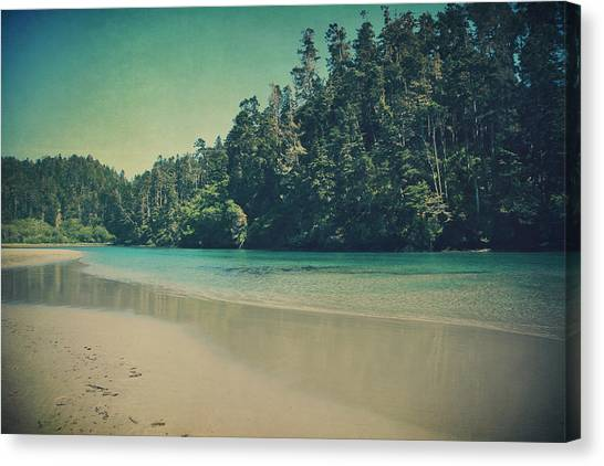 Redwood Forest Canvas Print - Gentle Musings by Laurie Search