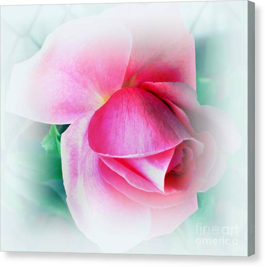 Gentleness And Grace Canvas Print