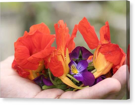 Gently Held Flowers Canvas Print by Carolyn Reinhart