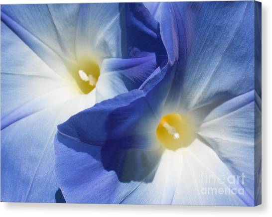 Gently Unfolding Canvas Print