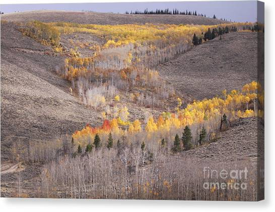 Geometric Autumn Patterns In The Rockies Canvas Print