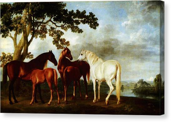 Canvas Print featuring the painting Horses by George Stubbs