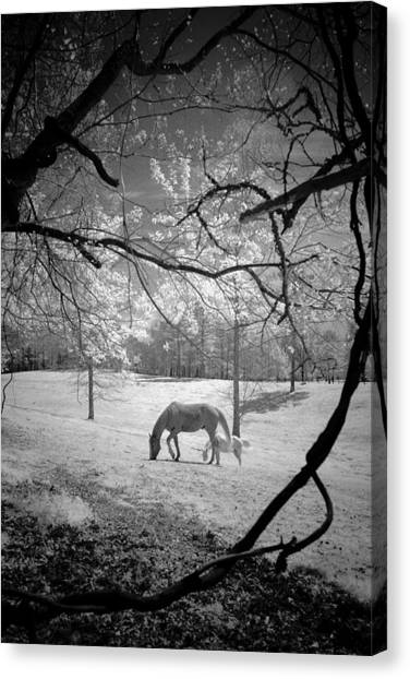 Georgia Horses Canvas Print