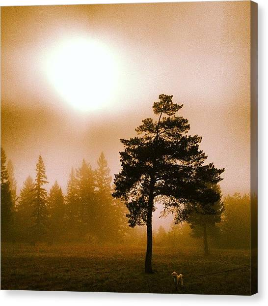 White Canvas Print - Morning Light by Blenda Studio