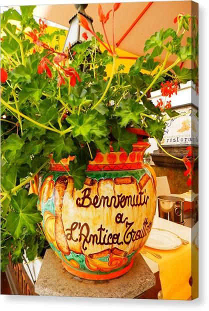 Geranium Planter Canvas Print