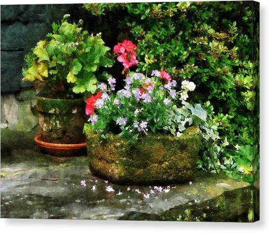 Geraniums And Lavender Flowers On Stone Steps Canvas Print by Susan Savad