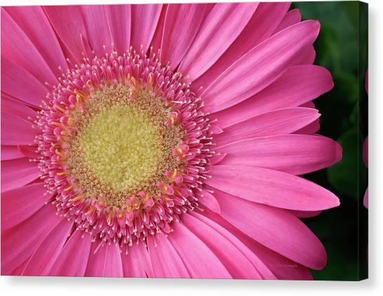 Gerbera Daisy 2 Canvas Print