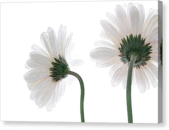 Gerbera Daisy I Canvas Print