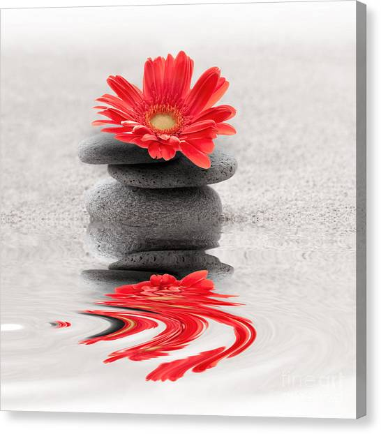 Gerbera Reflection Canvas Print