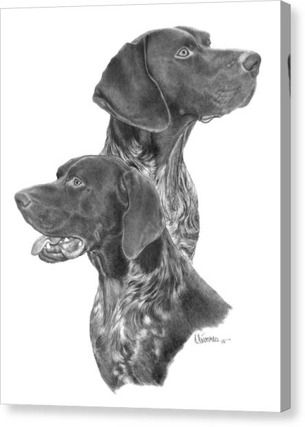 German Short-hair Pointer Canvas Print