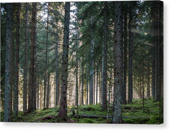 Black Forest Canvas Print - Germany, Baden-wurttemberg, Black by Walter Bibikow