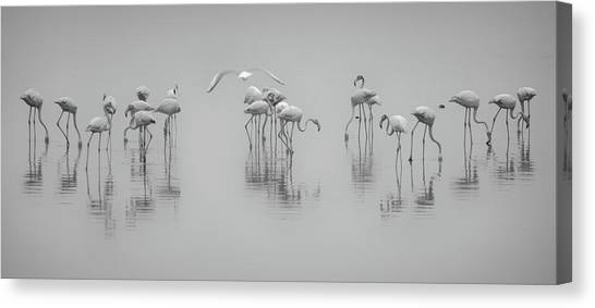 Kuwait Canvas Print - Get Down by Ahmed Thabet