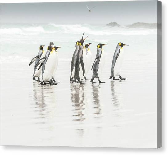 Penguins Canvas Print - Get Lost ! by Usha Peddamatham