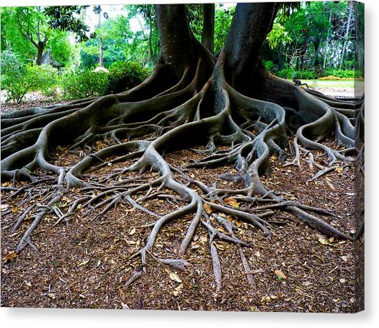 Get To The Root Of It Canvas Print