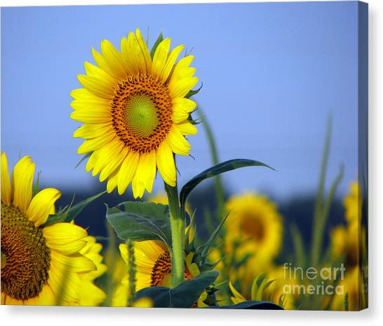 Canvas Print - Getting To The Sun by Amanda Barcon