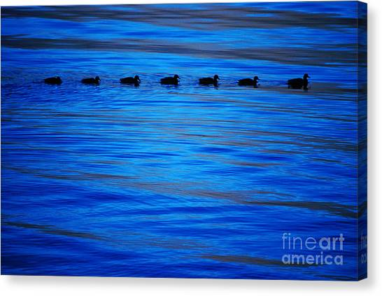 Getting Your Ducks In A Row Canvas Print