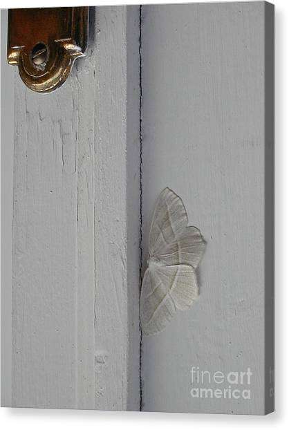 Ghost Doorbell Moth Canvas Print