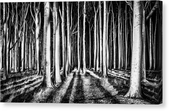 Tree Trunks Canvas Print - Ghost Forest by