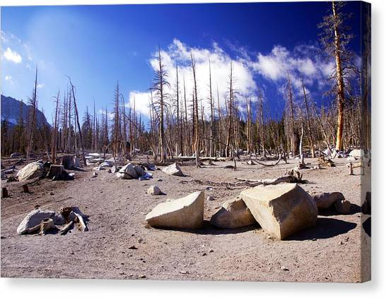 Ghost Forest 3 Canvas Print by Michael Courtney