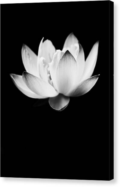 Ghost Lotus Canvas Print
