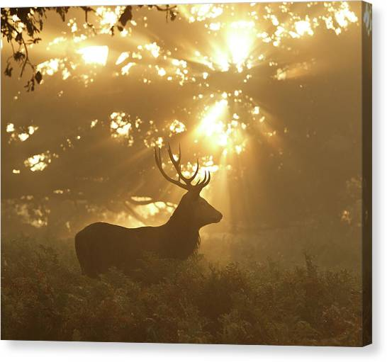 Stag Canvas Print - Ghost Of The Forest by Greg Morgan