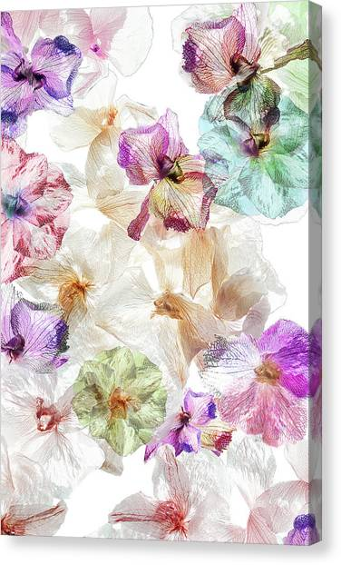 Orchids Canvas Print - Ghost Orchids by Ludmila Shumilova