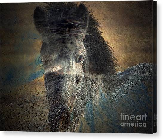 Ghost Pony Canvas Print
