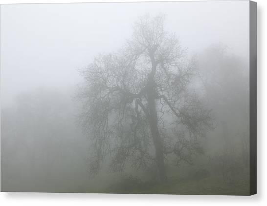 Ghostly Oak In Fog - Central California Canvas Print