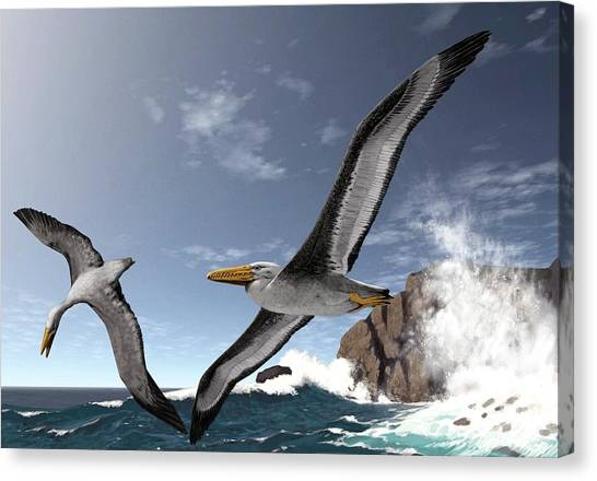 Condors Canvas Print - Giant Extinct Seabirds by Jaime Chirinos/science Photo Library