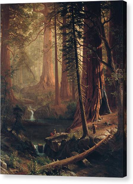 Famous Artists Canvas Print - Giant Redwood Trees Of California by Albert Bierstadt