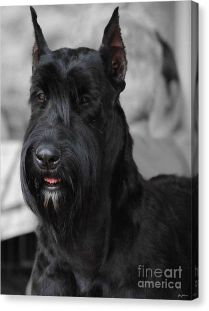 Schnauzers Canvas Print - Giant Schnauzer by Jai Johnson