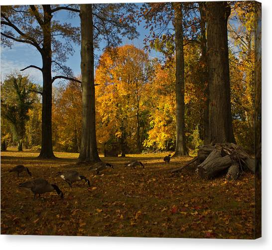 Giant Trees And Ducks Feeding Canvas Print