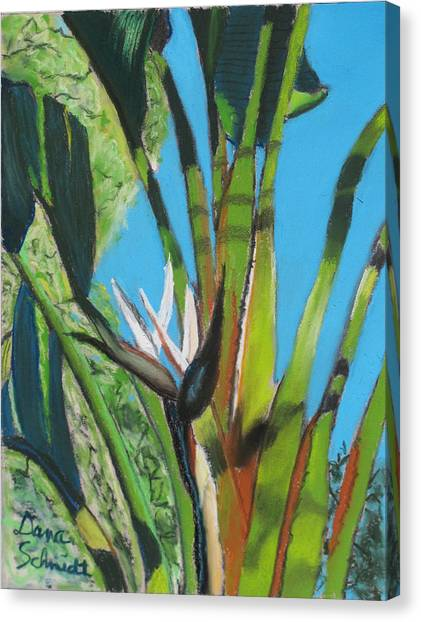 Giant White Bird Of Paradise Canvas Print