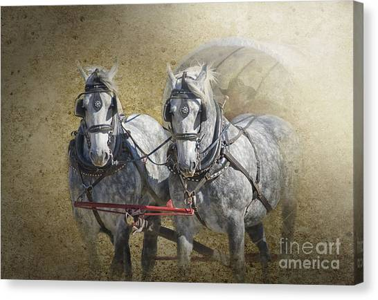 Dapple Gray Canvas Print - Giddyup by Betty LaRue