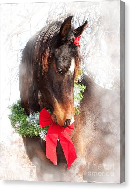 Gift Horse Canvas Print