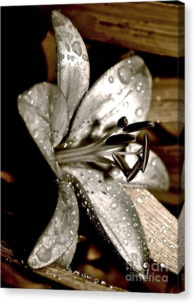 Gilded Lilies 3 Canvas Print