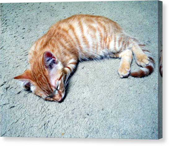 Ginger Sleeps Canvas Print
