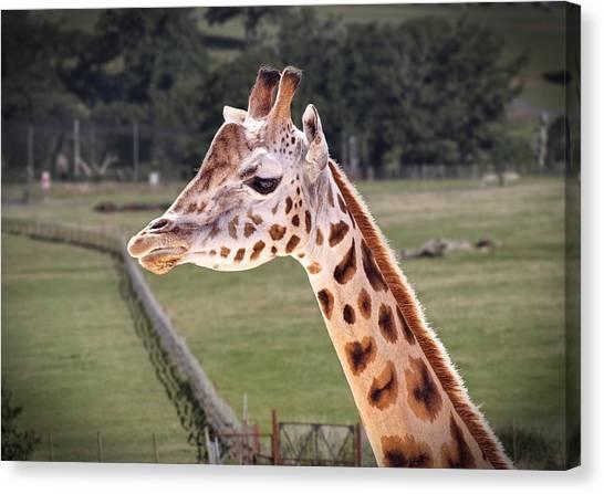 Giraffe 02 Canvas Print