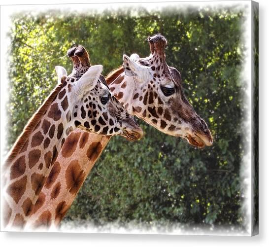 Giraffe 03 Canvas Print