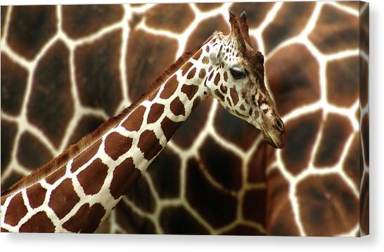Compose Canvas Print - Giraffe In Front Of  Mum by G??nther Gawlik