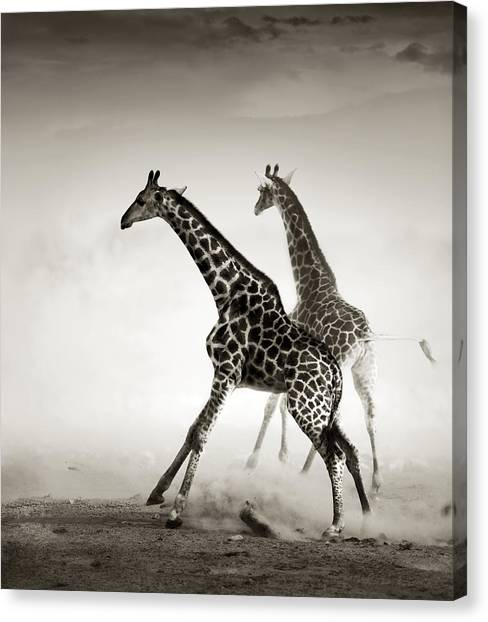 Giraffes Canvas Print - Giraffes Fleeing by Johan Swanepoel