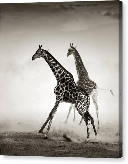 Art Movements Canvas Print - Giraffes Fleeing by Johan Swanepoel