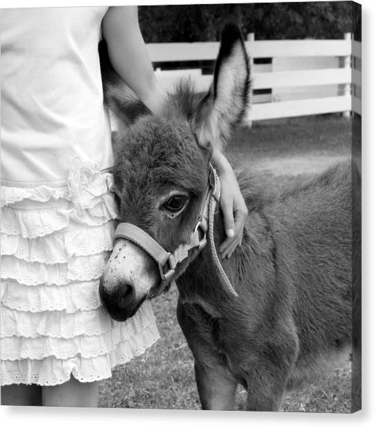Girl And Baby Donkey Canvas Print