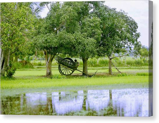 Mango Tree Canvas Print - Girl In An Oxcart by Peter Oxley