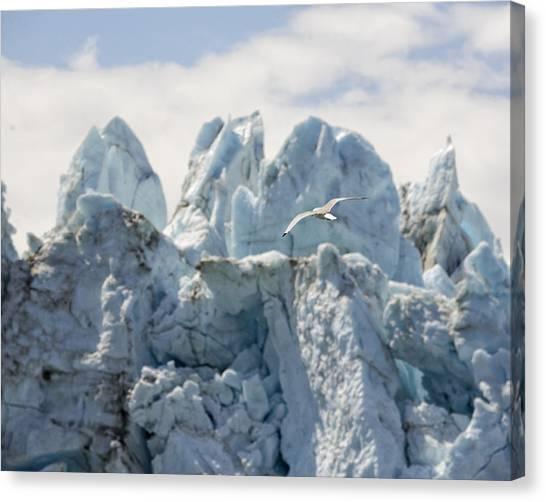 Margerie Glacier Canvas Print - Glacial Flight by Vicki Jauron