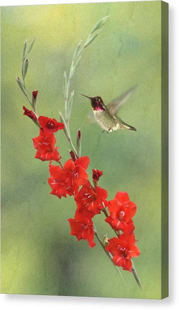 Gladiolas Canvas Print - Glad Hummingbird by Angie Vogel