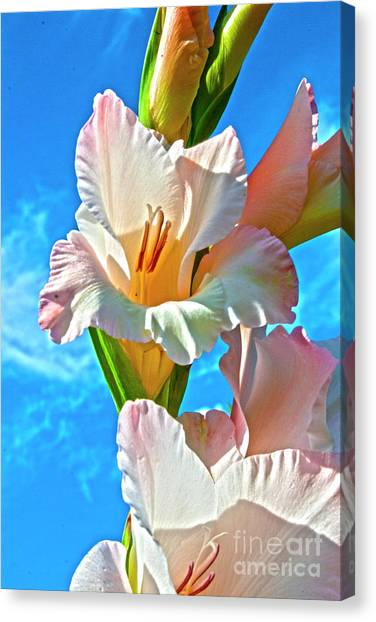 Canvas Print featuring the photograph Gladiolus by Heiko Koehrer-Wagner